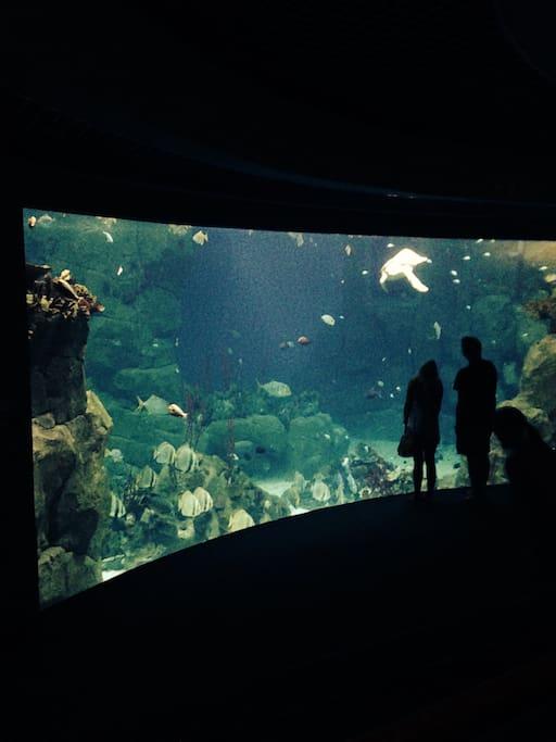 Aquarium near the Barbican
