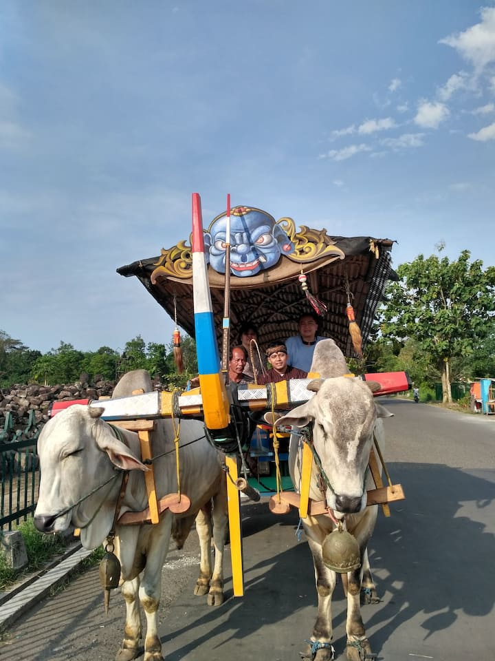 Village tour by ox cart