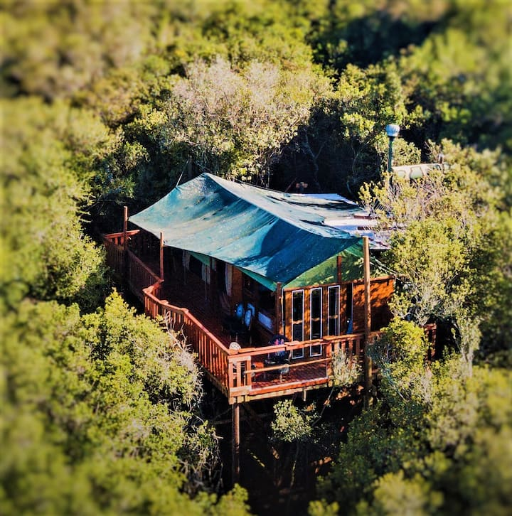 Family Sharing Treetop Suite