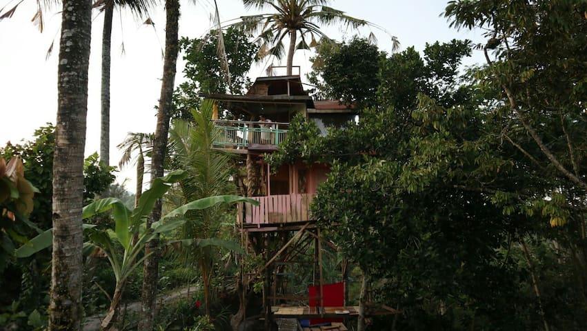 Alas bangkuwang home stay