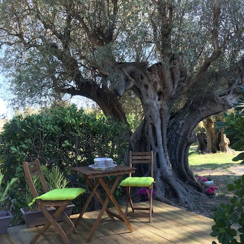 The room of the olive tree