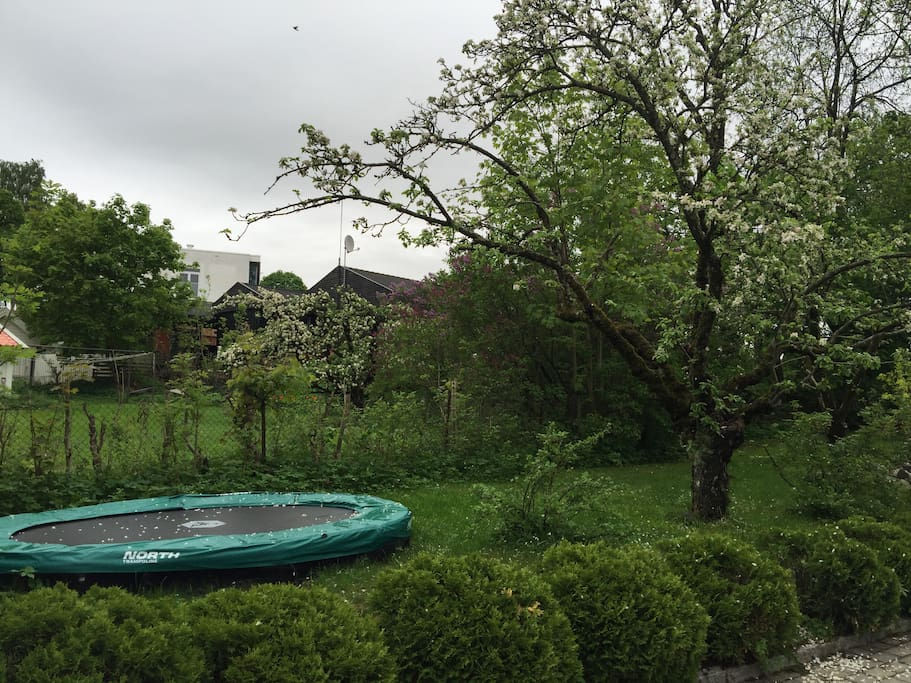 Kids can jump on the trampoline under the apple trees