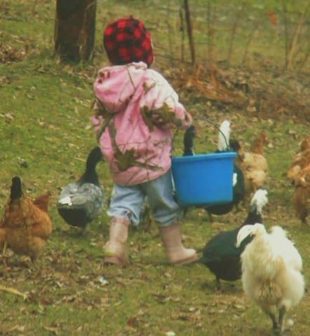 Father's Heart Farmstead - Brackney - Szoba reggelivel