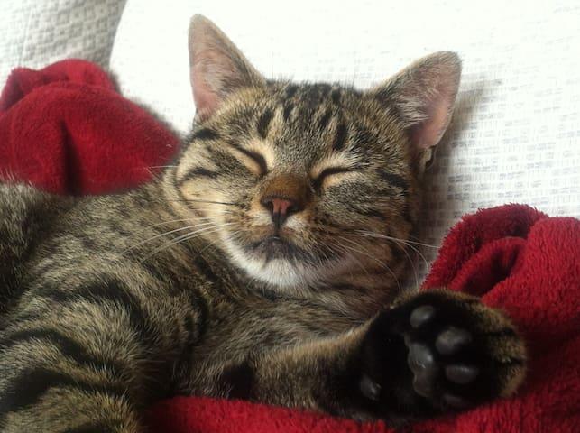 grosszügiges Haus mit Katzen - Gurzelen - Ev