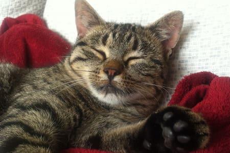 grosszügiges Haus mit Katzen - Gurzelen