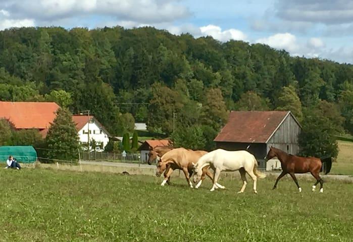 Ferien auf dem Pferdehof