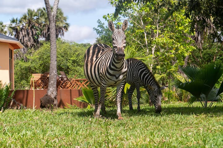 Bora Bora Wildlife Park and Luxury Tented Camp