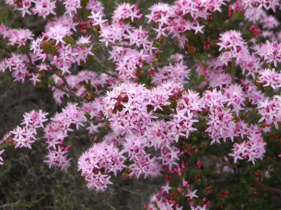Wild flower when in season