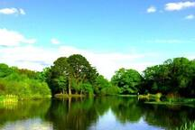 Southampton Common is the largest park in central Southampton, perfect for walks, jogging or a picnic, weather permitting!