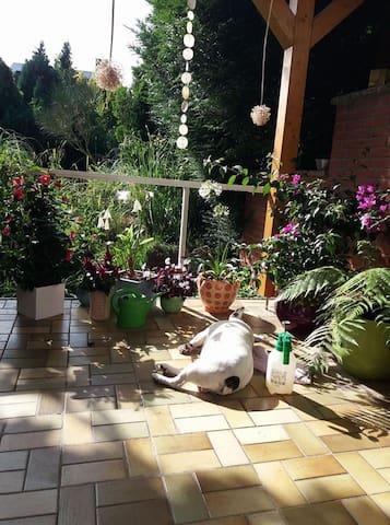 Helles modernes Zimmer mit Blick in den Garten