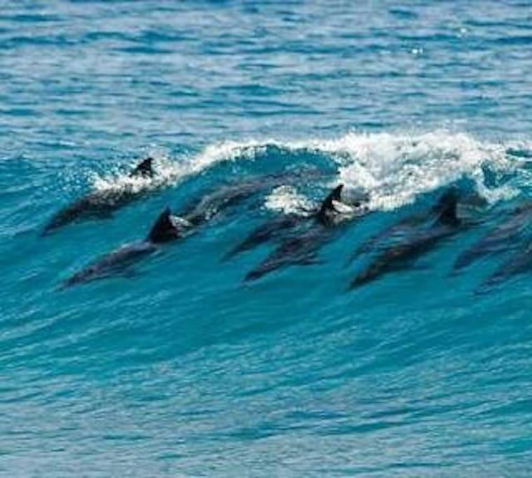 Dolphins at the Salt Rock Beach
