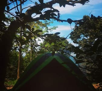 The RainForest Campsite at ABC Bay Tioman Island