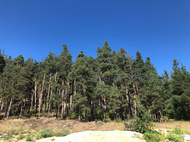 Borov park 2