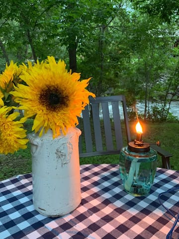 Summer evening in the backyard next to the creek.
