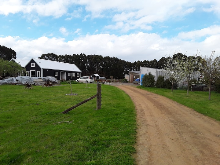 Converted woolshed on an old orchard