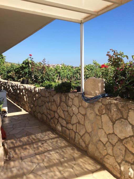 Vineyard in the garden