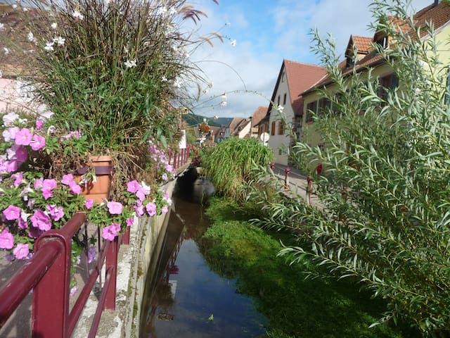 Take a break on the route de vin in Alsace - Soultzmatt - Pis