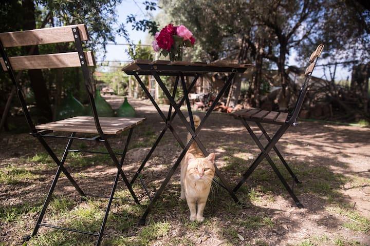 Ländliche Dolce Vita-Relax pur unter Olivenbäumen