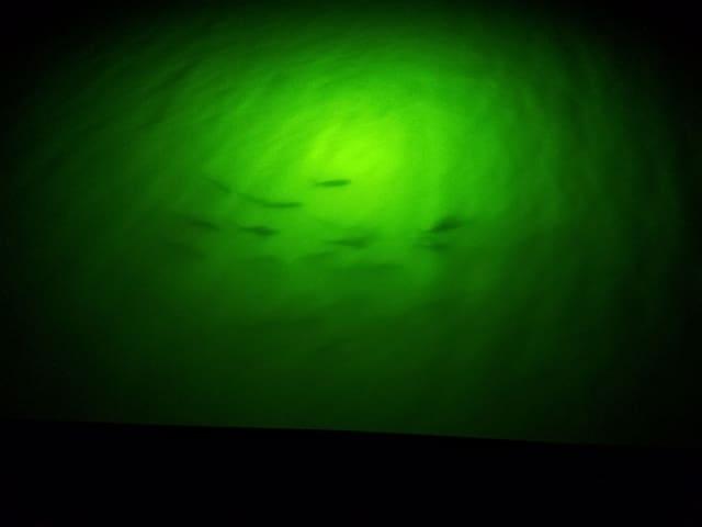 Salt water trout, great night fishing