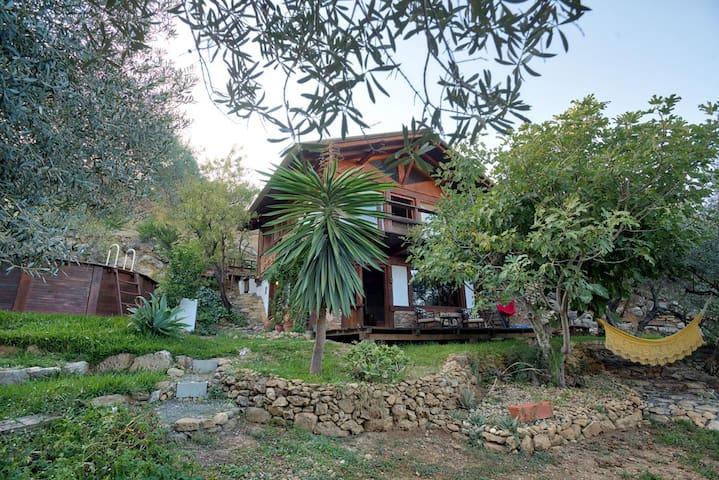Cabaña entre olivos