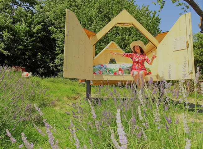 Magical lavender experience under the stars