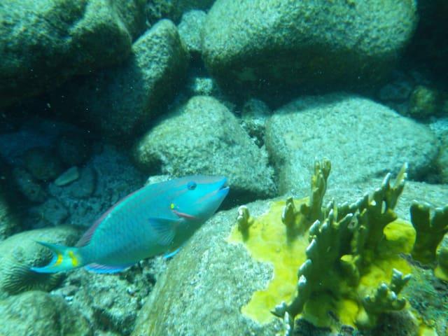 L'aqurium sous- marin à notre porte