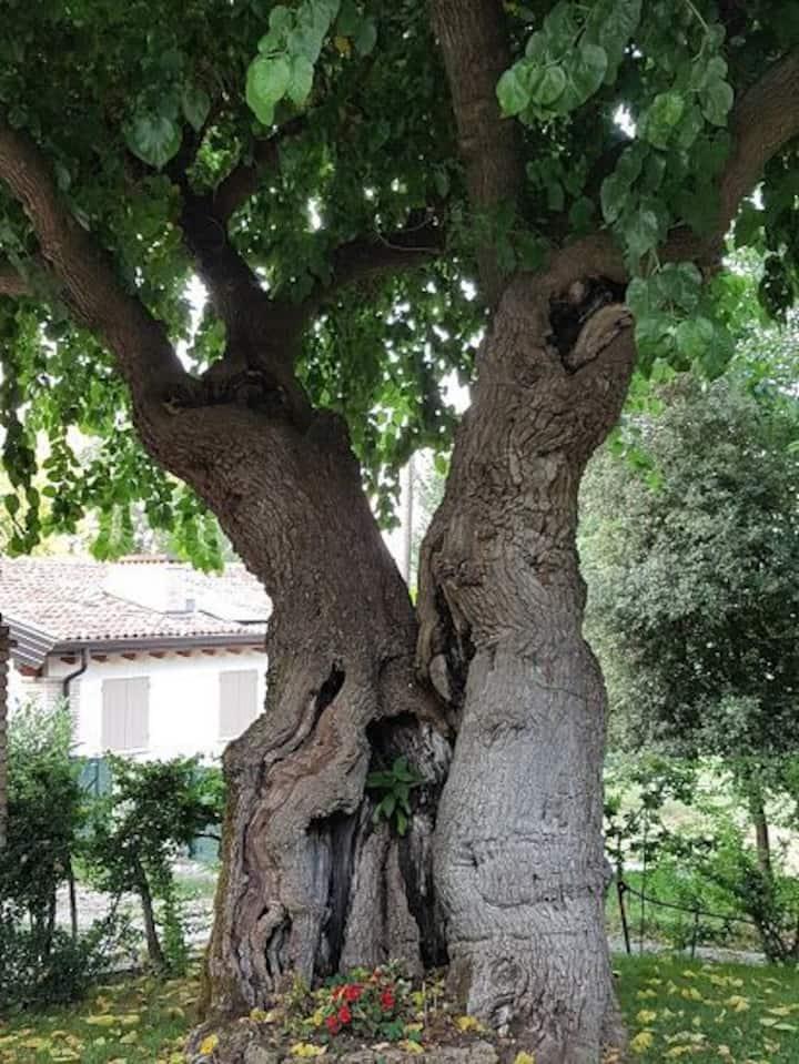 """Casale nella natura """"corte onida """""""
