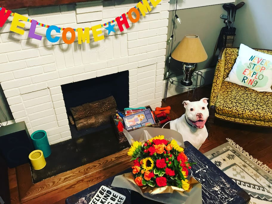 Our house dog, Nina, rescued at 9 months old from an abusive and negligent caretaker from Detroit, MI...Nina has welcomed around 400 guests into her home these last few years at 3.5 years of age and continues to be the center of attention at the Mindful Bungalow in Charlotte, NC!