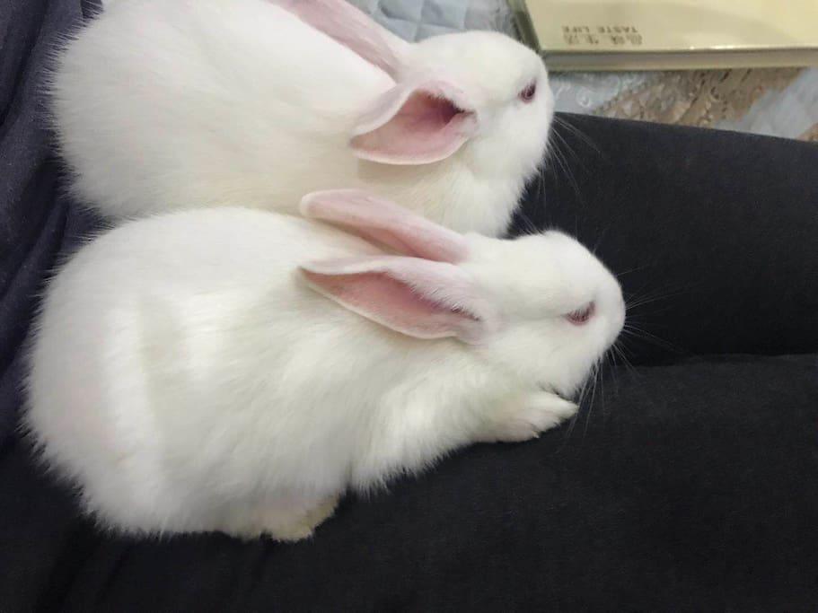 阳光房里有兔子的