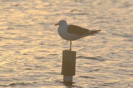 Se hospede e encontre sua natureza - birdwatching
