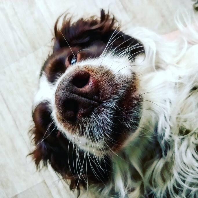 Doggy. Watson