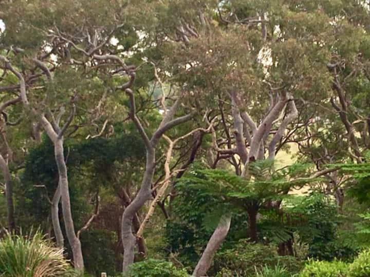 Sunny Studio near Balmoral Beach with Views