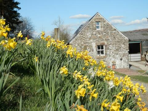 Curlew Cottage and Free Shepherd's Hut