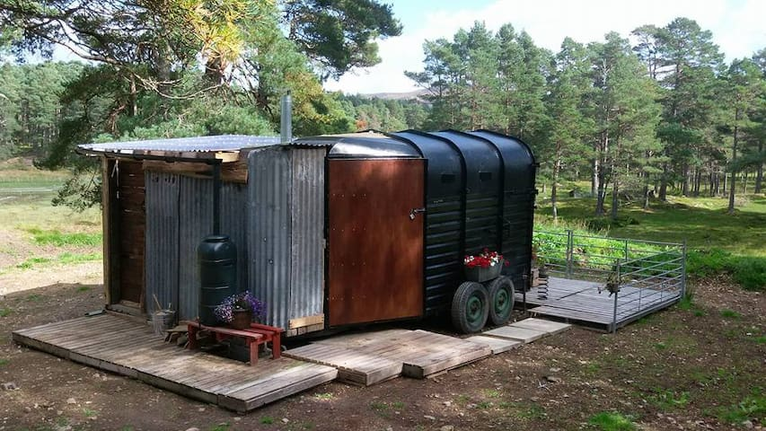 The Prancing Pony Wild Glamping Pod - Bonar Bridge - Cabana