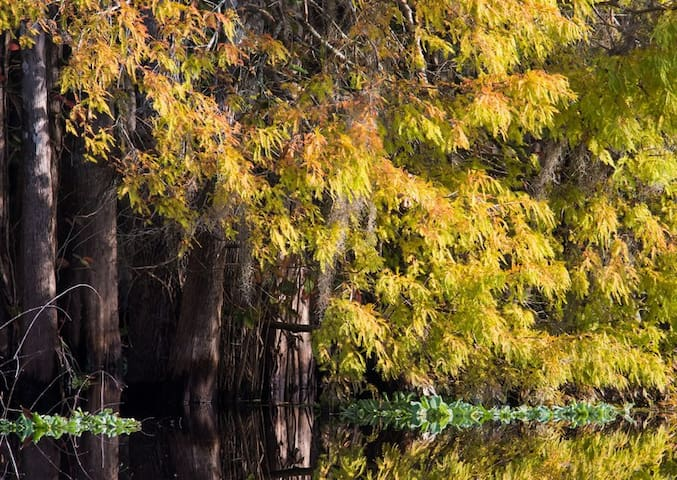 Wekiva River cypress reflection