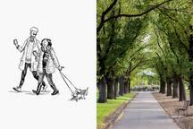 Edinburgh Gardens - a dog friendly park