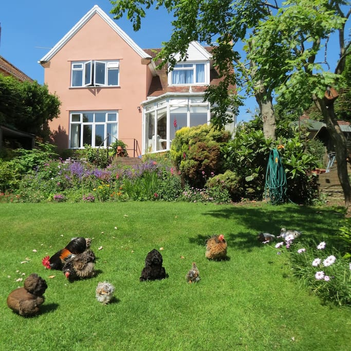 Garden with free range bantams