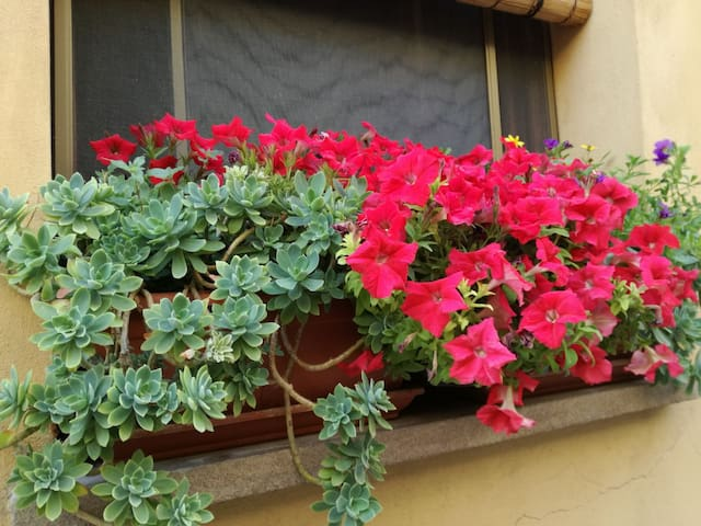 Terraced house in the heart of Volterra