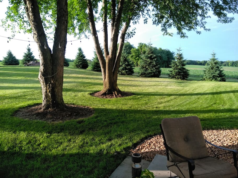 Yard from Patio