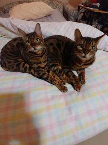 My twins Koko and Yum Yum
