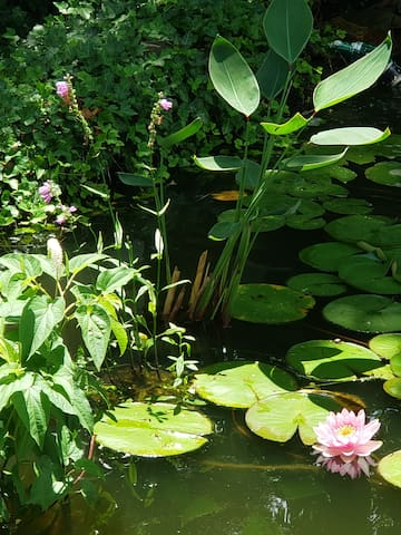 A few blooming water plants. The pond has an assortment of aquatic plants including lotuses and waterlilies.