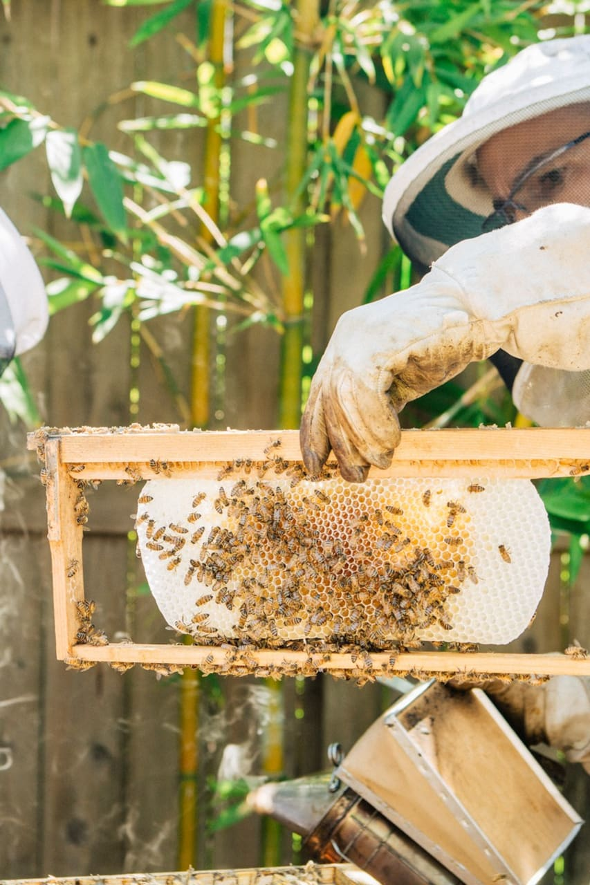 a day in the life of honey bees airbnb