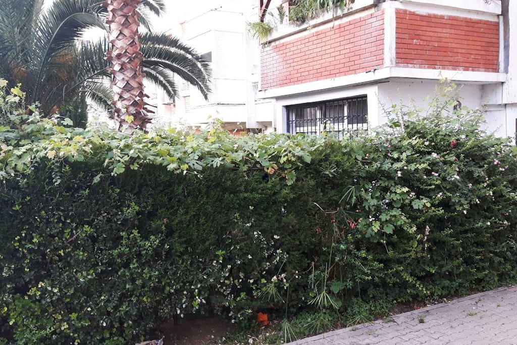 The view of the garden from the street
