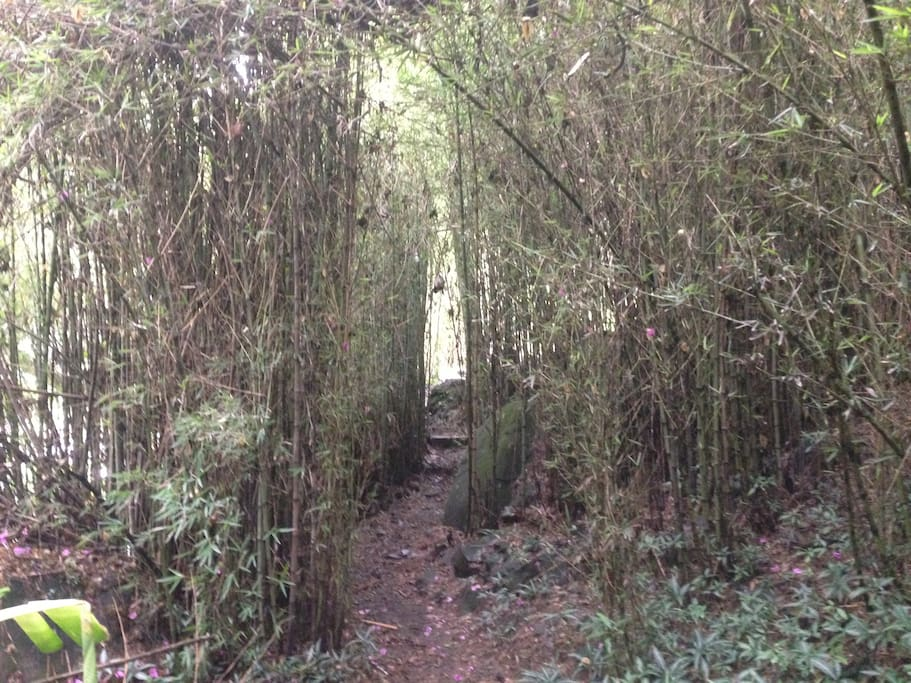 You have to walk trough a bamboo path to reach the house.