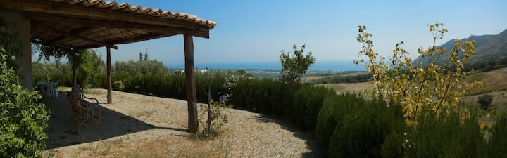Green olive trees and sparkling sea: peace and joy
