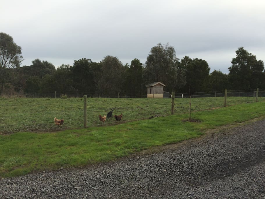Play with the chooks and enjoy fresh eggs every morning.