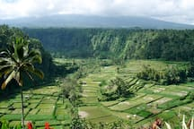 Central part of Bali: Tabanan. You can rent a car to go there