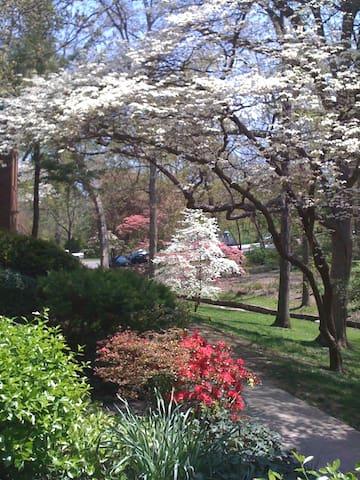Nature Retreat in Urban Arlington
