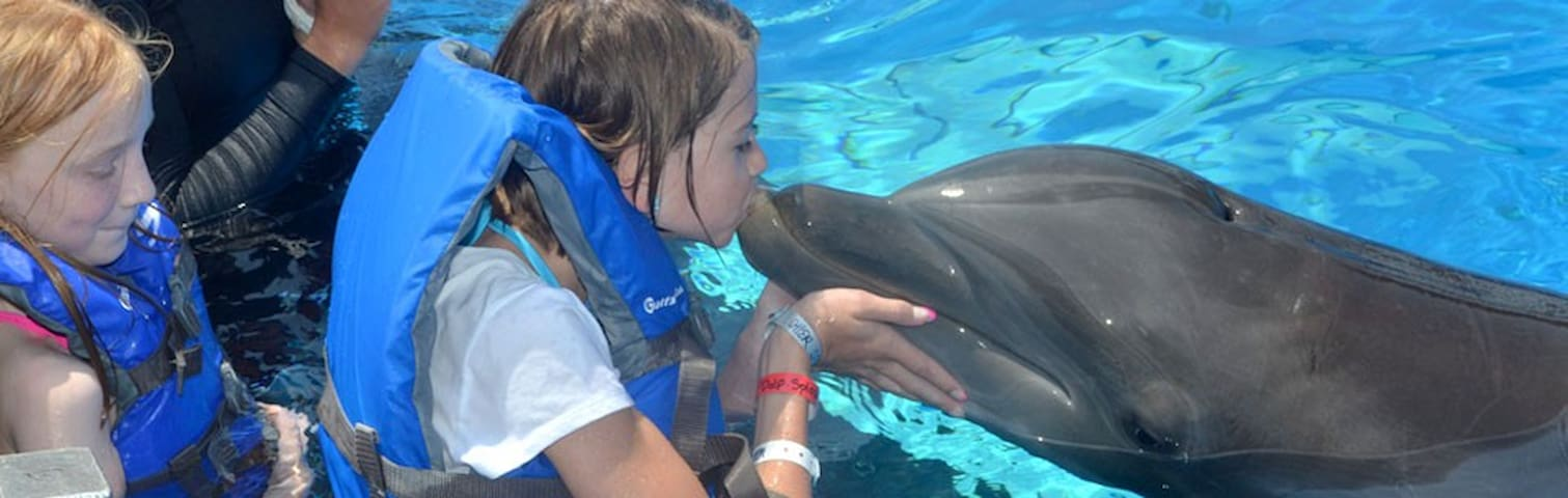 Want to kiss a dolphin?  Swim with a stingray?  Pet a penguin?  Sounds like you need a day at the Gulfarium Marine Adventure Park that's only 7 miles from Mojo!
