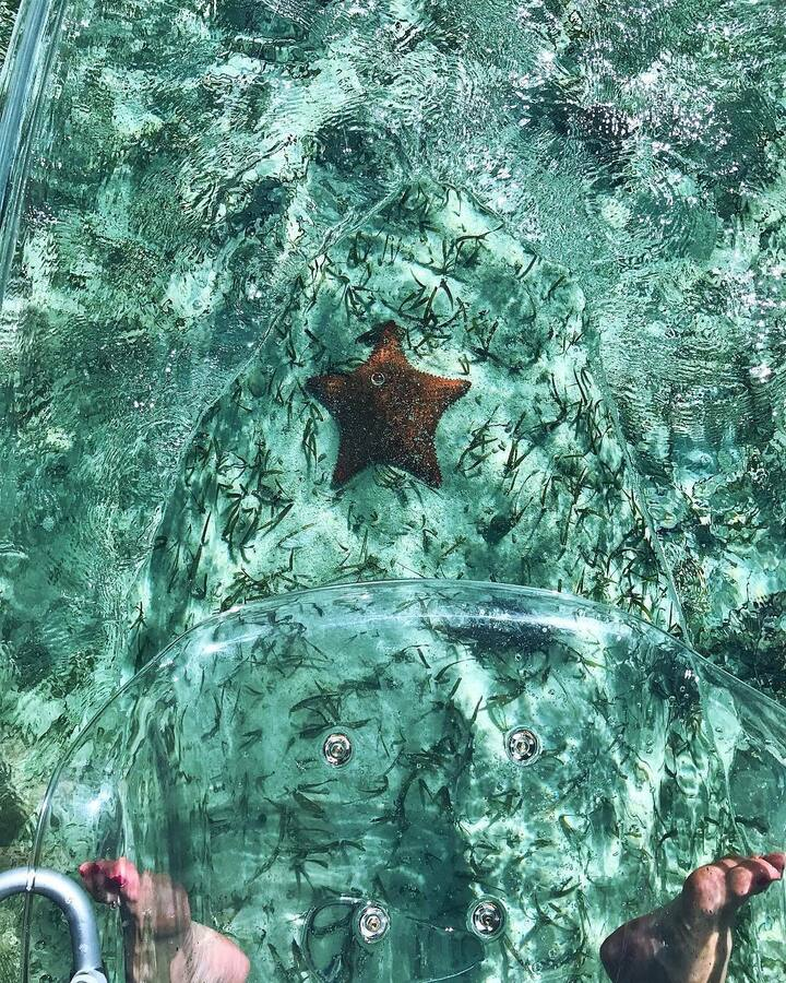 Beautiful starfish below our clear kayak
